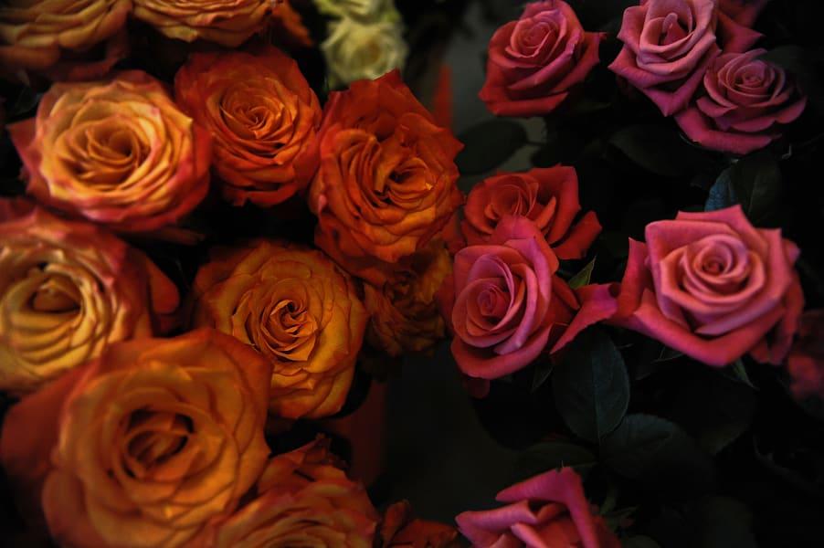 Kenya flowers 2