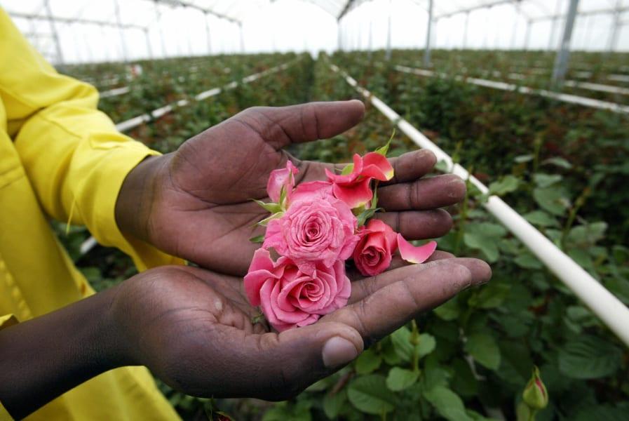 Kenya flowers 5