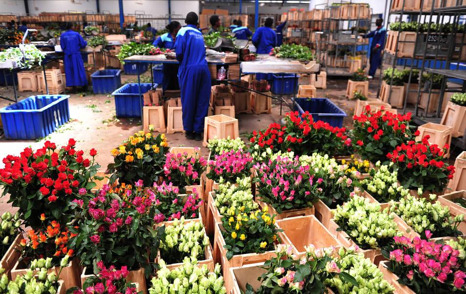 Kenya flowers 8