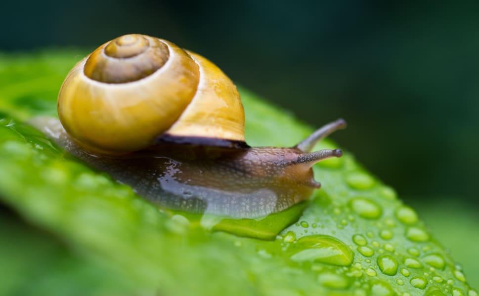Ig Nobel snail