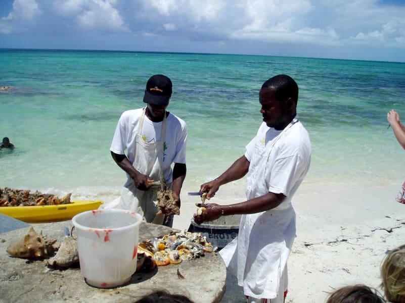 islands turks and caicos conch irpt
