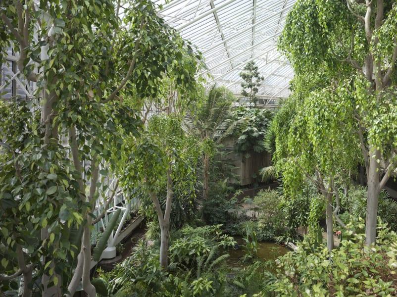 Amazing Gardens- Barbican Conservatory