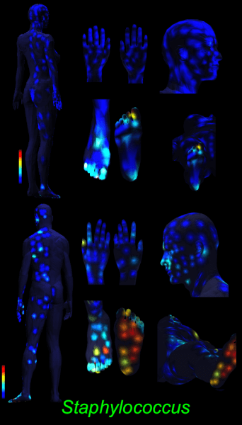 3D skin map staphylococcus 2