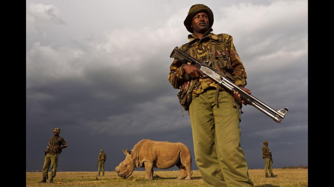 02 Sudan white rhino 0416