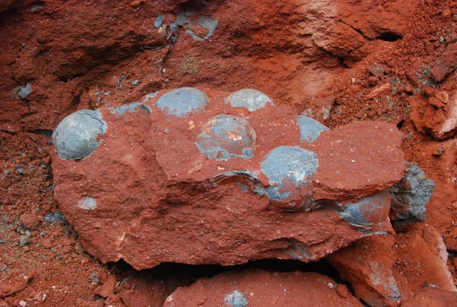 china dinosaur fossil eggs