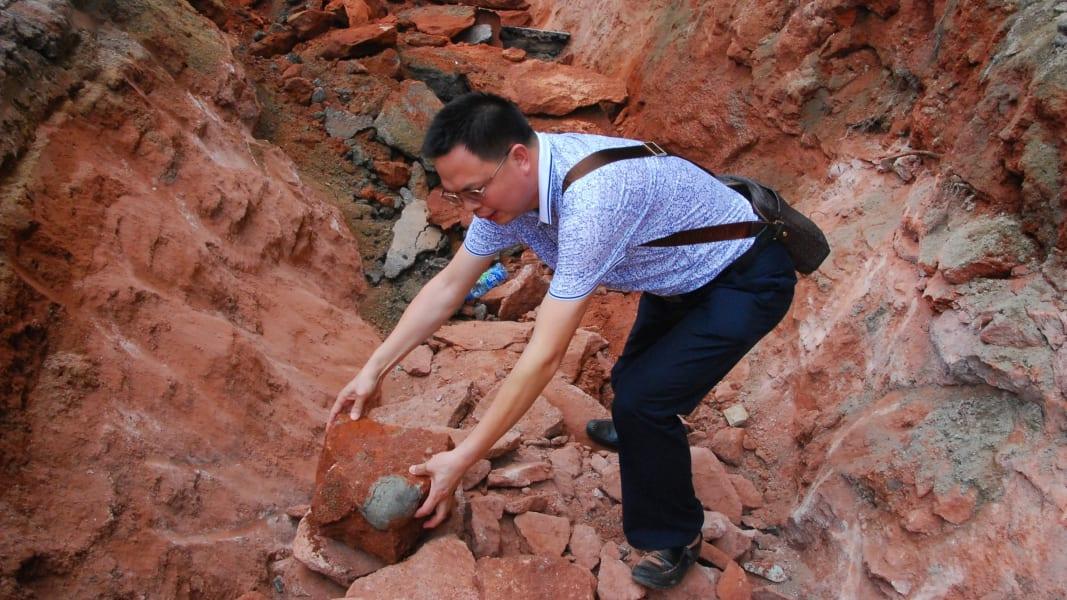 03 dinosaur fossil eggs china