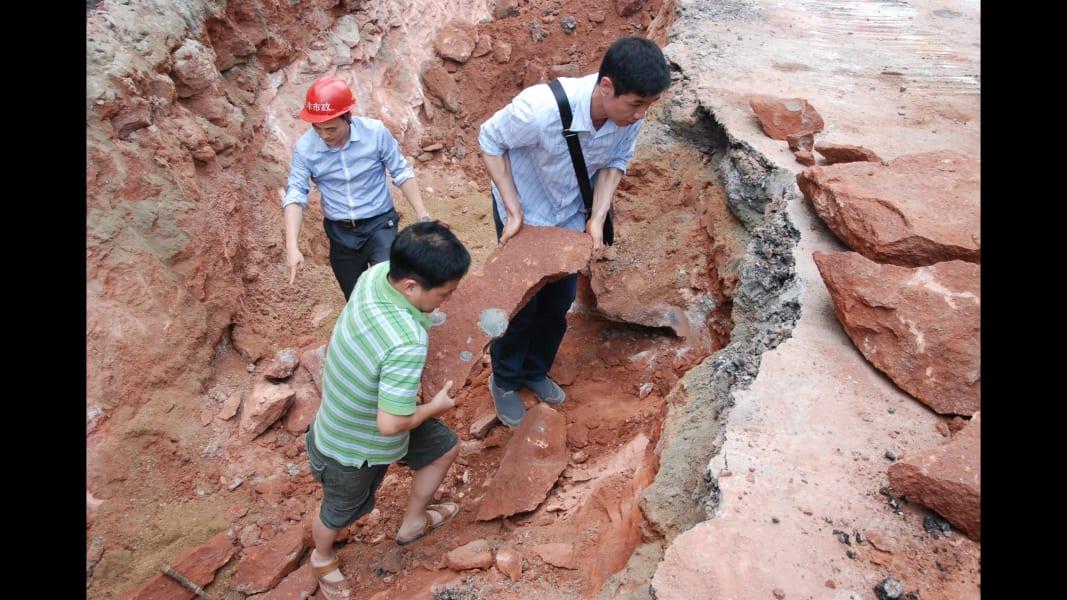 04 dinosaur fossil eggs china