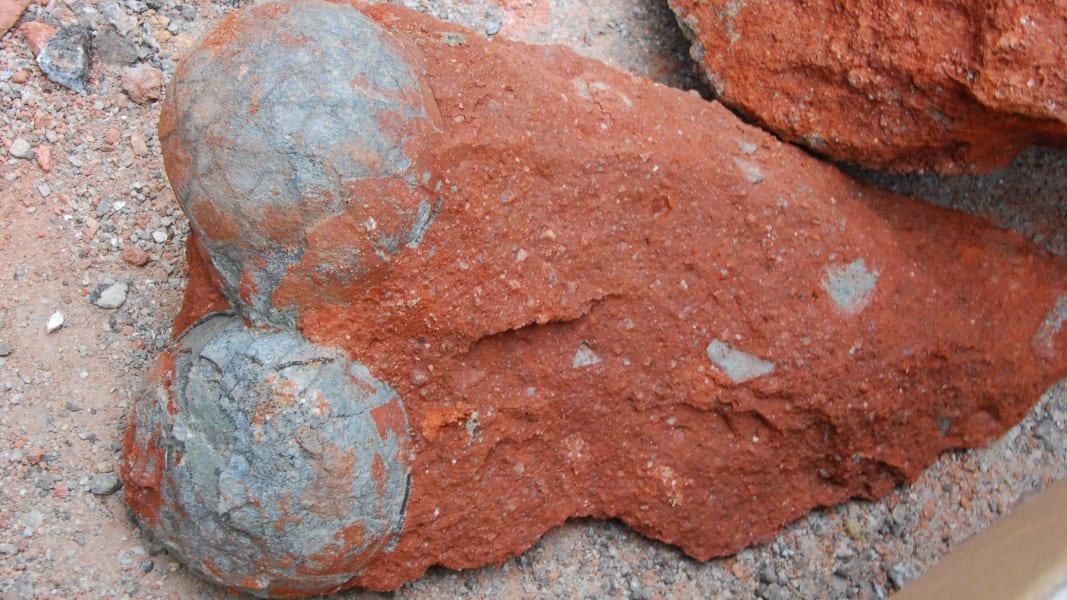 05 dinosaur fossil eggs china