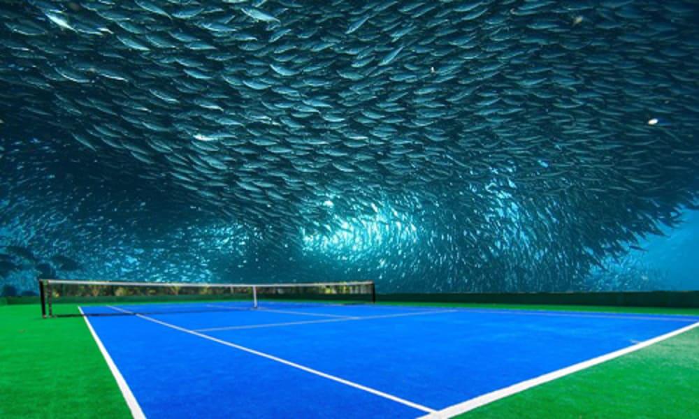 underwater tennis fish shoals