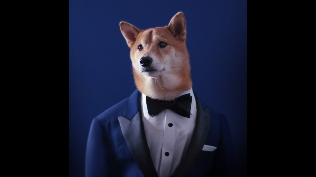 01 menswear dog 0529