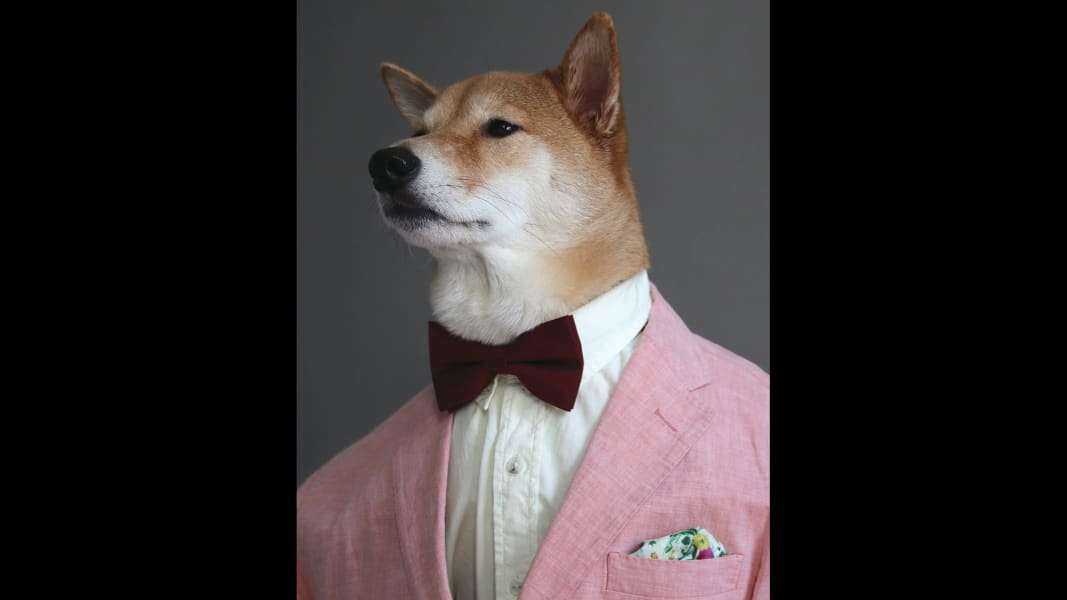 05 menswear dog 0601