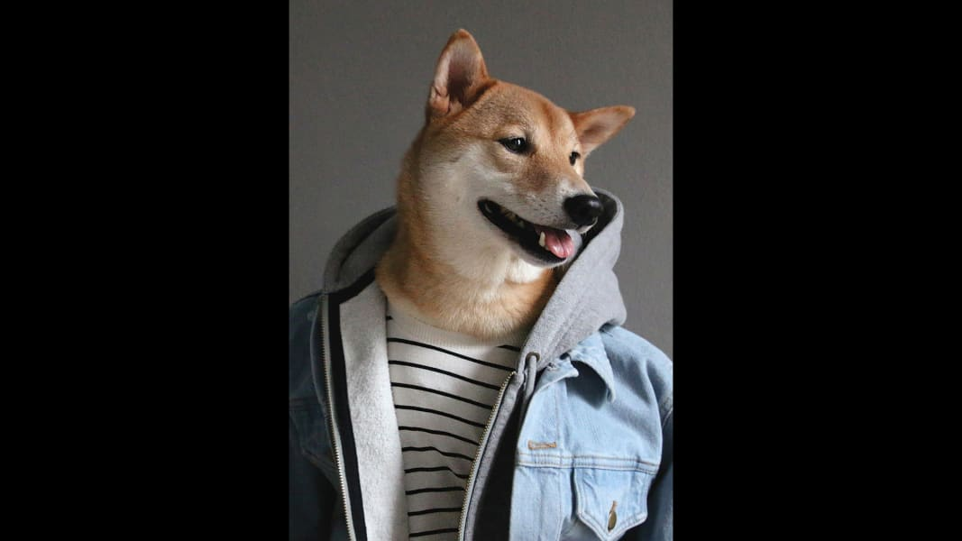 07 menswear dog 0601