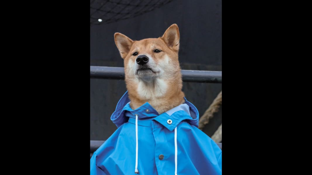 11 menswear dog 0601