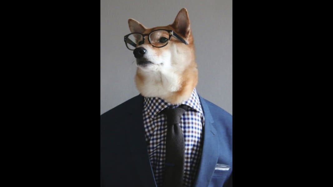 15 menswear dog 0601