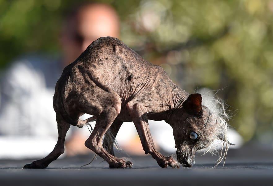 03 ugliest dog 0627