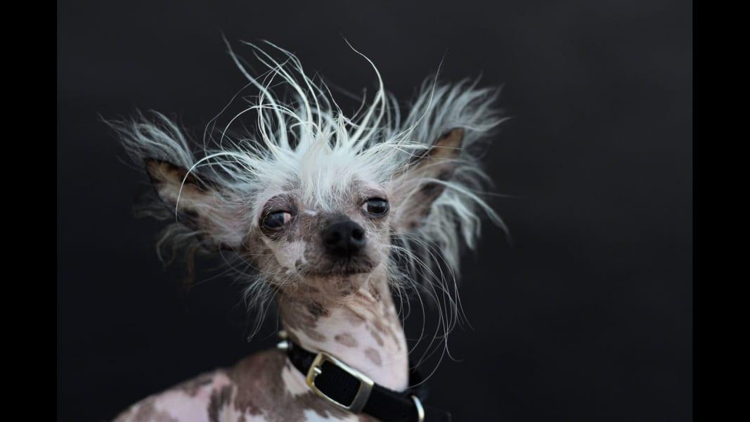 04 ugliest dog 0627