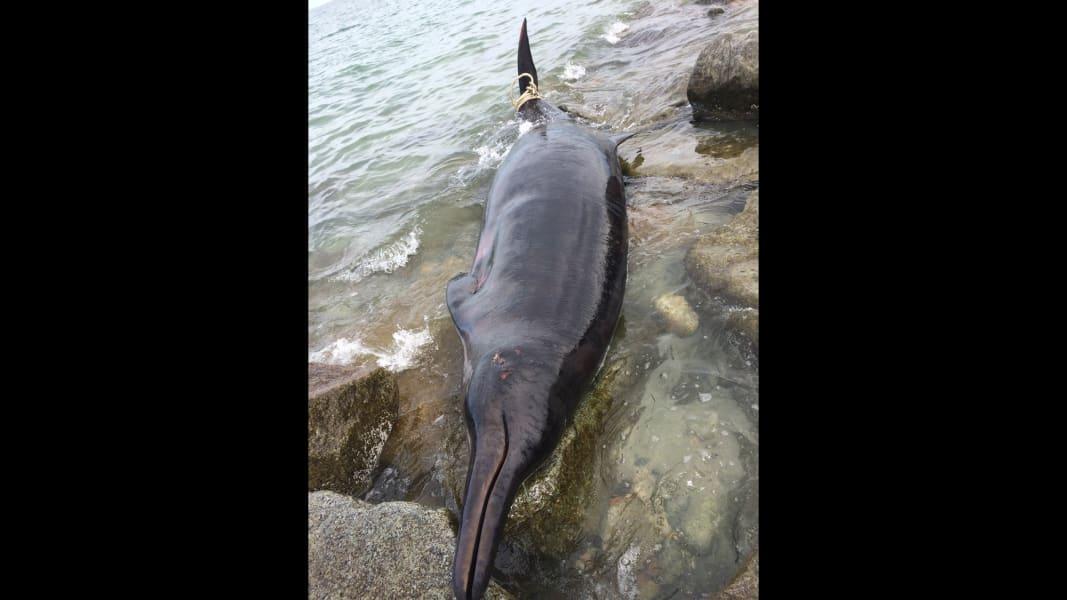 04.plymouth-beached-whale.Plymouth Beached Whale.JPG