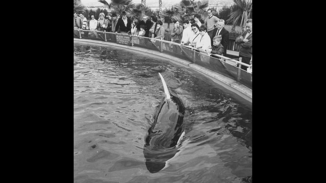 shamu killer whale RESRICTED
