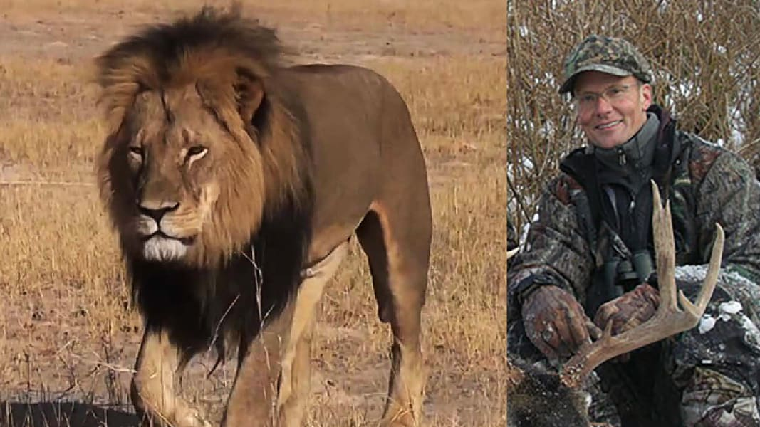 cecil lion hunter palmer split