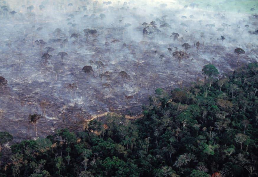 deforestation RESTRICTED