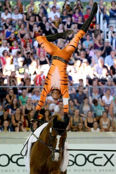 aachen tiger vaulting