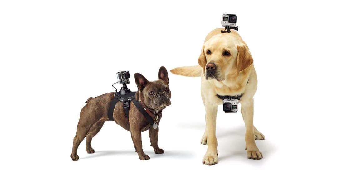 High Tech Pet Toys