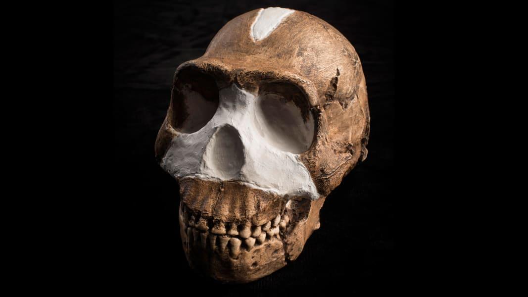 RESTRICTED Homo Naledi Skull Closeup Wits