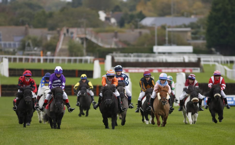 Shetland Pony Gold Cup 5