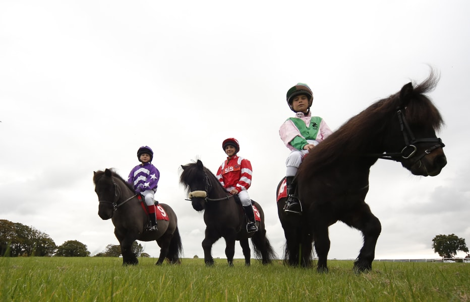 Shetland Pony Gold Cup 7