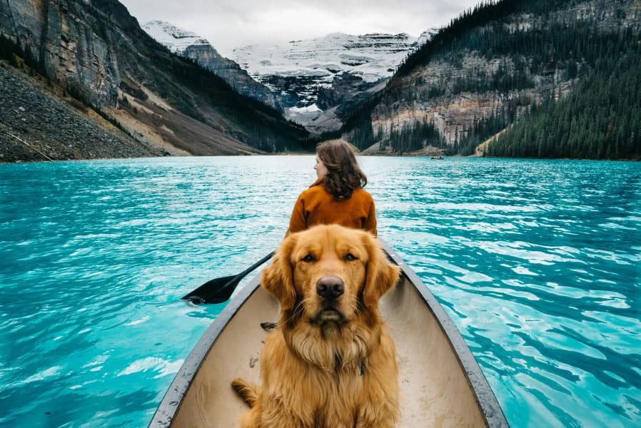 Aspen Dog