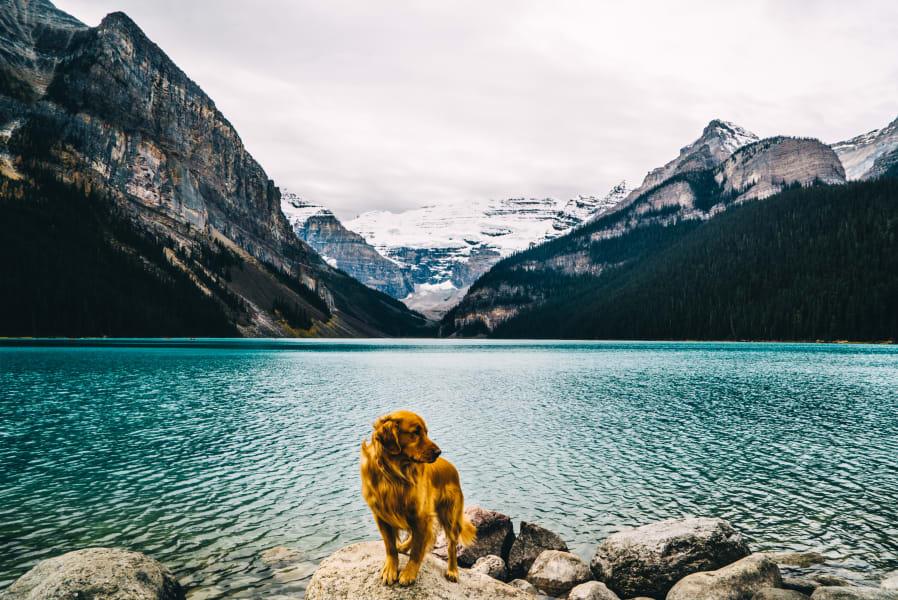 Aspen Dog 2