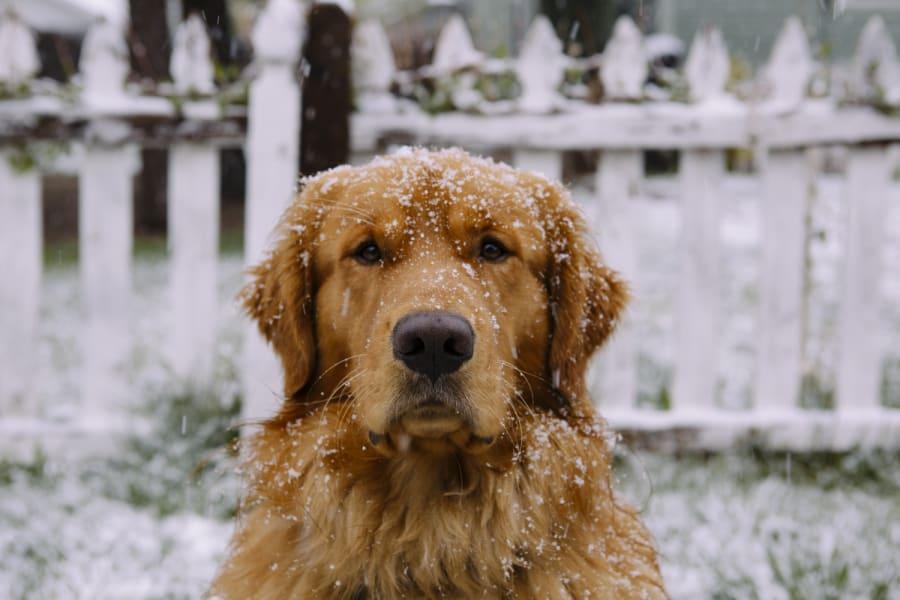 Aspen dog 3