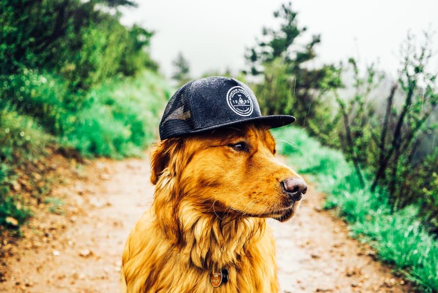Aspen dog 4