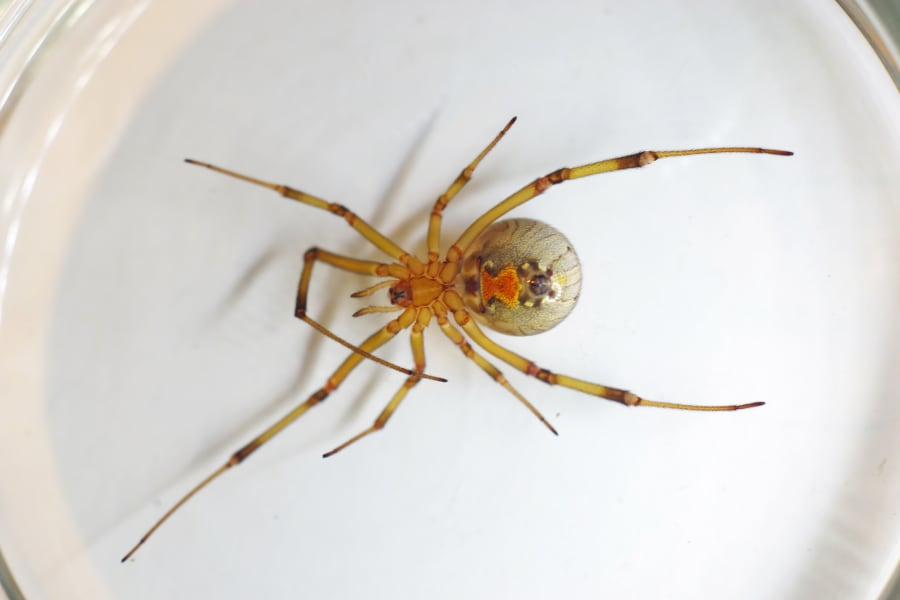 Some Of The World S Most Dangerous Spiders