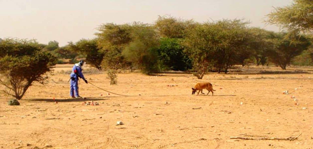 dog landmine operation