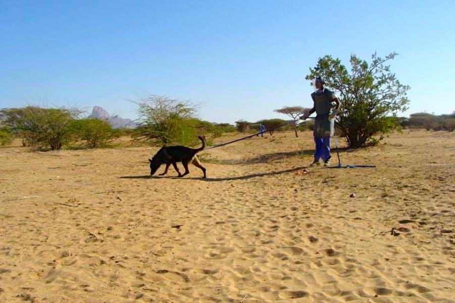 dog landmine operation 2