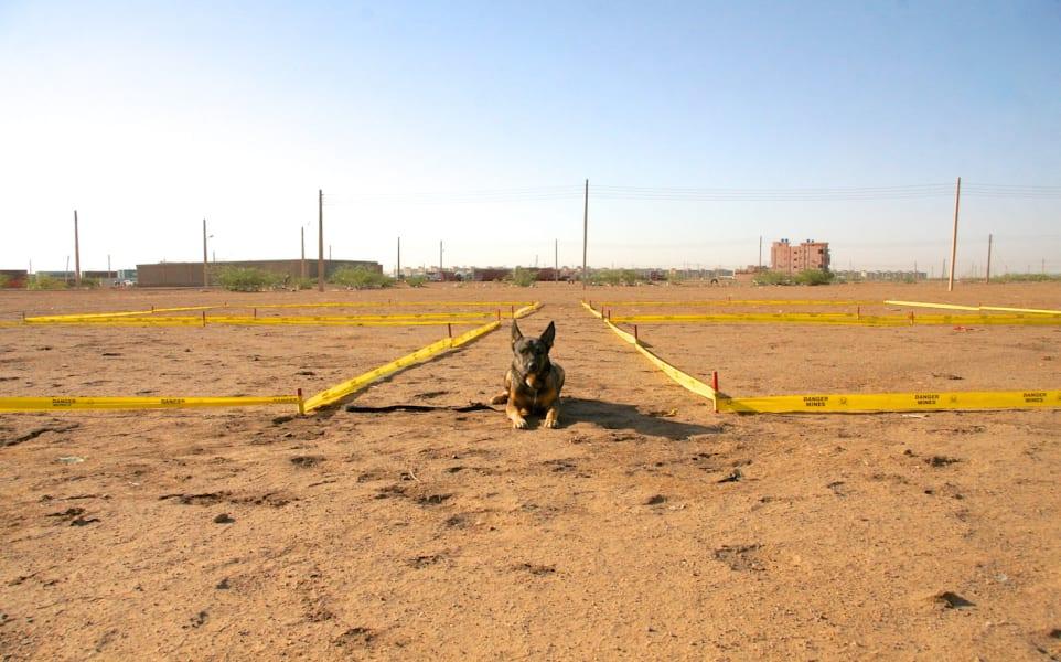 sudan landmine dogs 2
