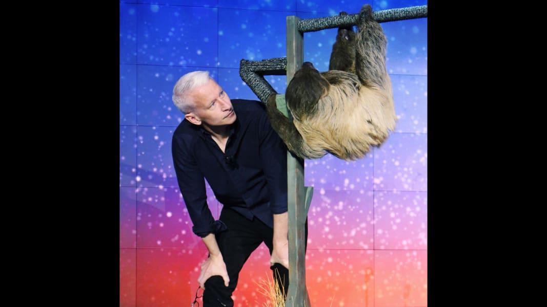 Anderson Sloth