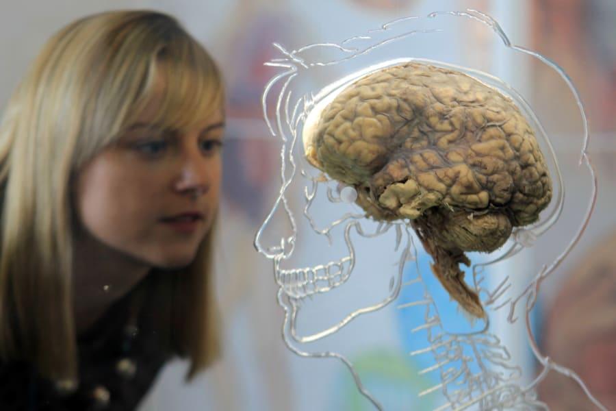 real human brain getty