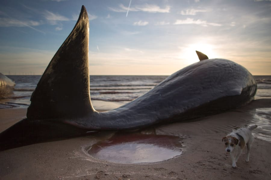 beached whales 1