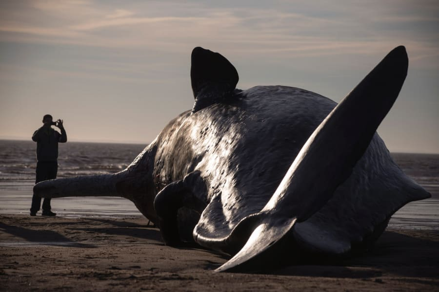 beached whales 2