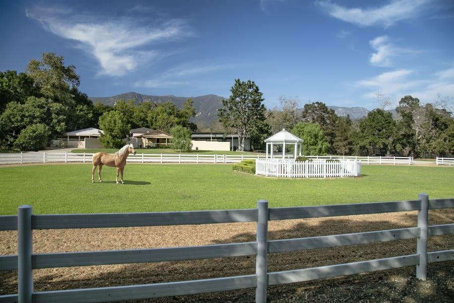 oprah winfrey horse farm paddock