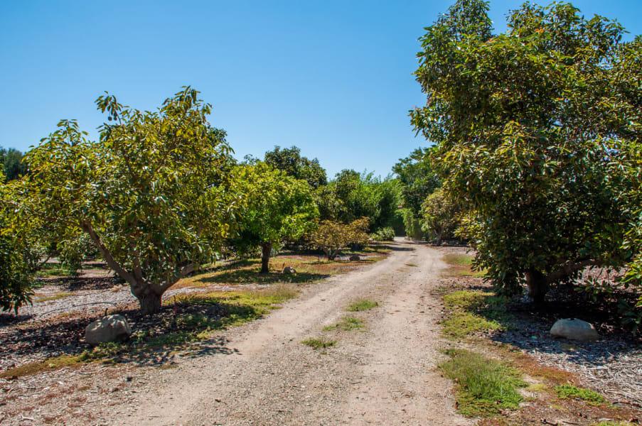 oprah winfrey avocado grove