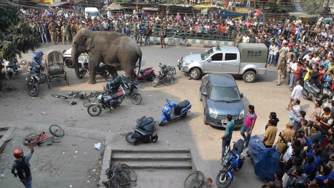 04 wild elephant 0210