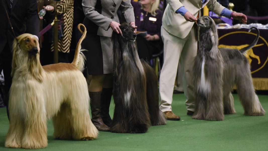 10 westminster dog show