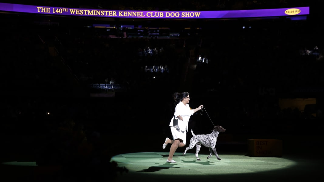 02b westminster dog show