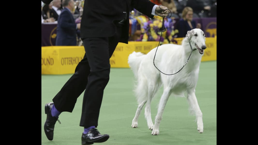 03b westminster dog show
