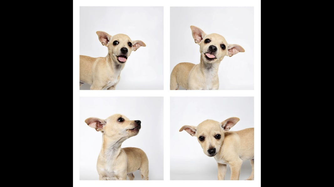02 UHS Puppy Day