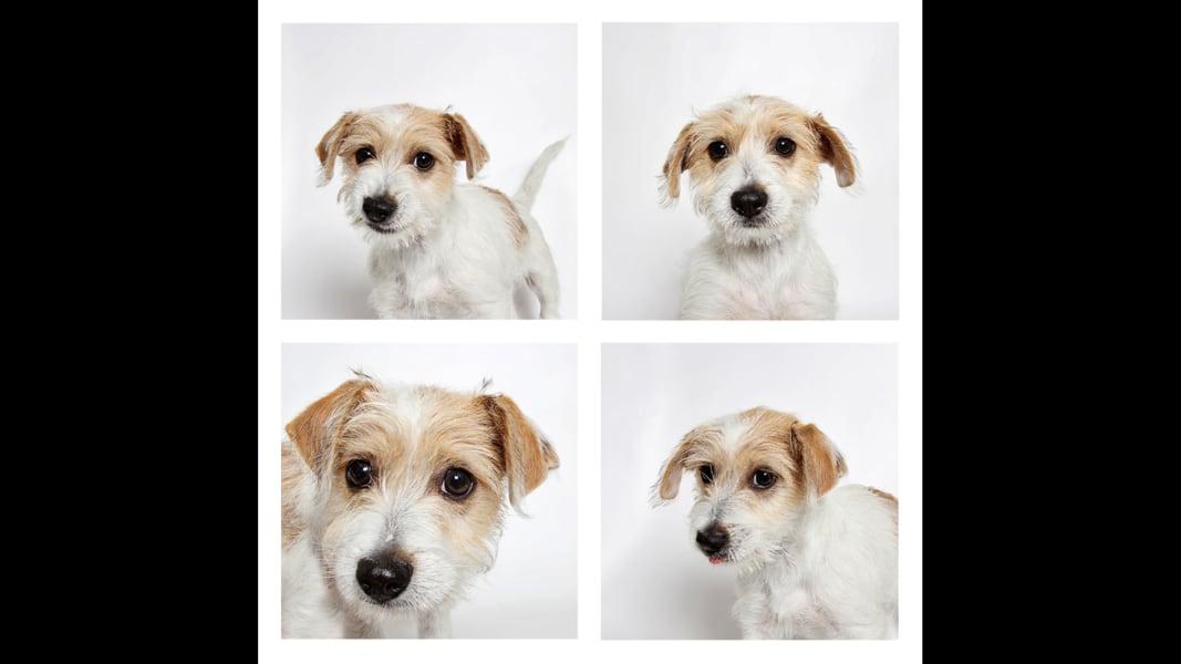 08 UHS Puppy Day