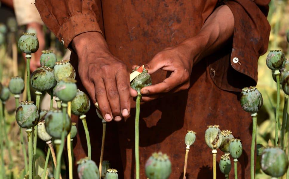 opium sap